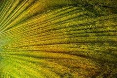 Abstrakt begrepp av färger i tunn is Arkivbilder