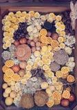 Abstrakt begrepp av garneringväxter Fotografering för Bildbyråer
