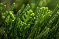 Abstrakt begrepp av grön bladbakgrund Royaltyfri Foto