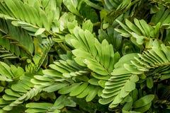 Abstrakt begrepp av grön bladbakgrund Royaltyfri Fotografi