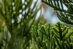 Abstrakt begrepp av grön bladbakgrund Royaltyfria Bilder