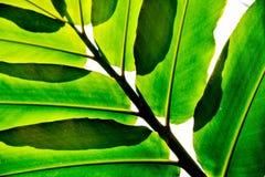 Abstrakt begrepp av grön bladbakgrund Arkivbilder