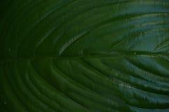 Abstrakt begrepp av grön bladtextur Arkivfoton