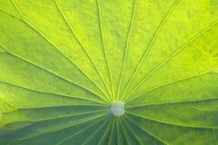Abstrakt begrepp av Lotus blocktextur Royaltyfri Fotografi