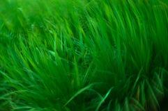 Abstrakt begrepp av nytt grönt gräs Arkivfoton