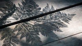 Abstrakt begrepp av ormbunkebladskugga Royaltyfria Foton