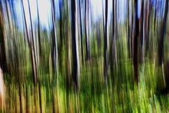Abstrakt begrepp av skogsmarken Arkivfoton