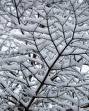 Abstrakt begrepp av snö laden trädfilialer som upp ser closeupen Royaltyfri Fotografi