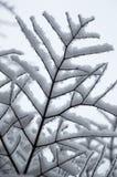 Abstrakt begrepp av snö laden trädfilialer som upp ser closeupen Arkivbild