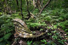 Abstrakt begrepp av trädet i skog Royaltyfri Bild