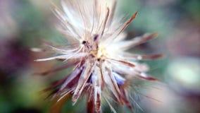 Abstrakt begrepp blomma Royaltyfria Foton