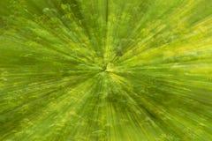Abstrakt begrepp blured grön bakgrund av naturexplosion, zoomande e royaltyfria bilder