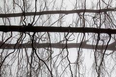 abstrakt begrepp branches treen Royaltyfri Fotografi