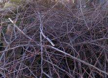 abstrakt begrepp branches treen Royaltyfri Foto