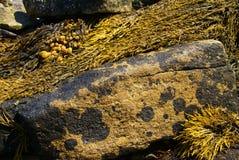 Abstrakt begrepp - brun brunalg på granitstenblocket royaltyfria foton