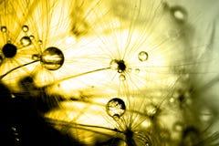 Abstrakt begrepp colorize makro av växtfrömaskrosen Royaltyfri Bild