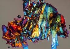 Abstrakt begrepp den polariserande micrographen av malen särar med grå backgrou Arkivfoto