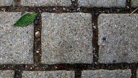 Abstrakt begrepp för konkret trottoar med det gröna bladet och matchen klibbar Arkivfoton