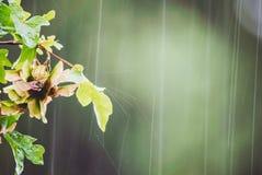 Abstrakt begrepp för sommarregndroppar Royaltyfri Foto