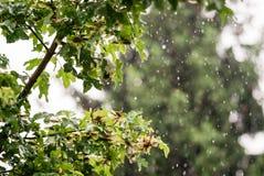 Abstrakt begrepp för sommarregndroppar Royaltyfria Foton