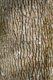 Abstrakt begrepp för trädskäll Royaltyfria Bilder