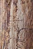 Abstrakt begrepp för trädstam Royaltyfri Fotografi