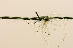 abstrakt begrepp förse med en hulling begreppsmässig designillustrationtråd Fotografering för Bildbyråer