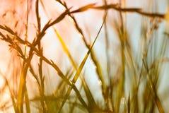 Abstrakt begrepp fjädrar gräs royaltyfri fotografi