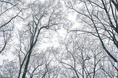 Abstrakt begrepp fryste trädfilialer vinter för blåa snowflakes för bakgrund vit Arkivbilder