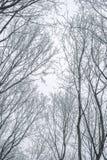Abstrakt begrepp fryste trädfilialer vinter för blåa snowflakes för bakgrund vit Arkivfoto