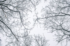 Abstrakt begrepp fryste trädfilialer vinter för blåa snowflakes för bakgrund vit Royaltyfria Bilder