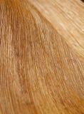 Abstrakt begrepp gömma i handflatan Wood textur för ormbunksbladet Arkivfoto
