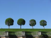 Abstrakt begrepp landskap med trees Fotografering för Bildbyråer