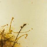 Abstrakt begrepp målad vattenfärgbakgrund Vektor Illustrationer