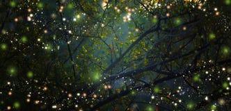 Abstrakt begrepp och magisk bild av eldflugaflyget i nattskogen fotografering för bildbyråer