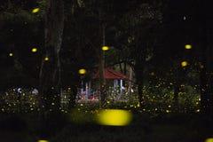 Abstrakt begrepp och magisk bild av eldflugaflyget i nattskogen Royaltyfri Fotografi