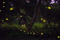 Abstrakt begrepp och magisk bild av eldflugaflyget i nattskogen Royaltyfria Bilder
