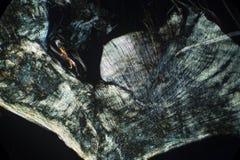 Abstrakt begrepp polariserande micrograph av en daggmask som parar ihop skidan Royaltyfri Bild