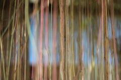 abstrakt begrepp rotar Arkivfoton