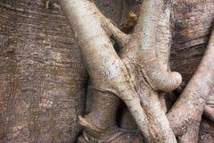 Abstrakt begrepp rotar av en trädcloseup Royaltyfri Fotografi