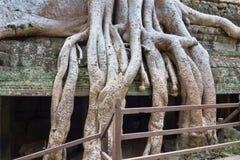 Abstrakt begrepp rotar av ett träd Arkivbilder