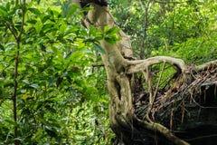 Abstrakt begrepp rotar trädet i skogen Royaltyfria Bilder