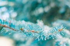 Abstrakt begrepp sörjer trädbakgrund, solljus och suddig bakgrund Fotografering för Bildbyråer