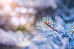 Abstrakt begrepp sörjer trädbakgrund, solljus och suddig bakgrund Arkivfoto