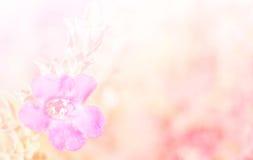 Abstrakt begrepp som är oskarpt av blomman och färgrik bakgrund Arkivfoto