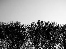 Abstrakt begrepp som är svartvitt av träd och himmel vektor illustrationer