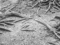 Abstrakt begrepp som är svartvitt av träd, rotar och jord Fotografering för Bildbyråer