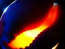 abstrakt begrepp, som bakgrund suddighetdde kammusslasnäckskal Arkivfoto