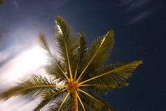 Abstrakt begrepp som skjutas av naturliga kokosnötpalmträd Royaltyfri Fotografi