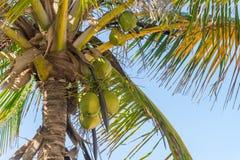 Abstrakt begrepp som skjutas av naturliga kokosnötpalmträd Royaltyfria Foton